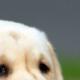 PUP Zierikzee